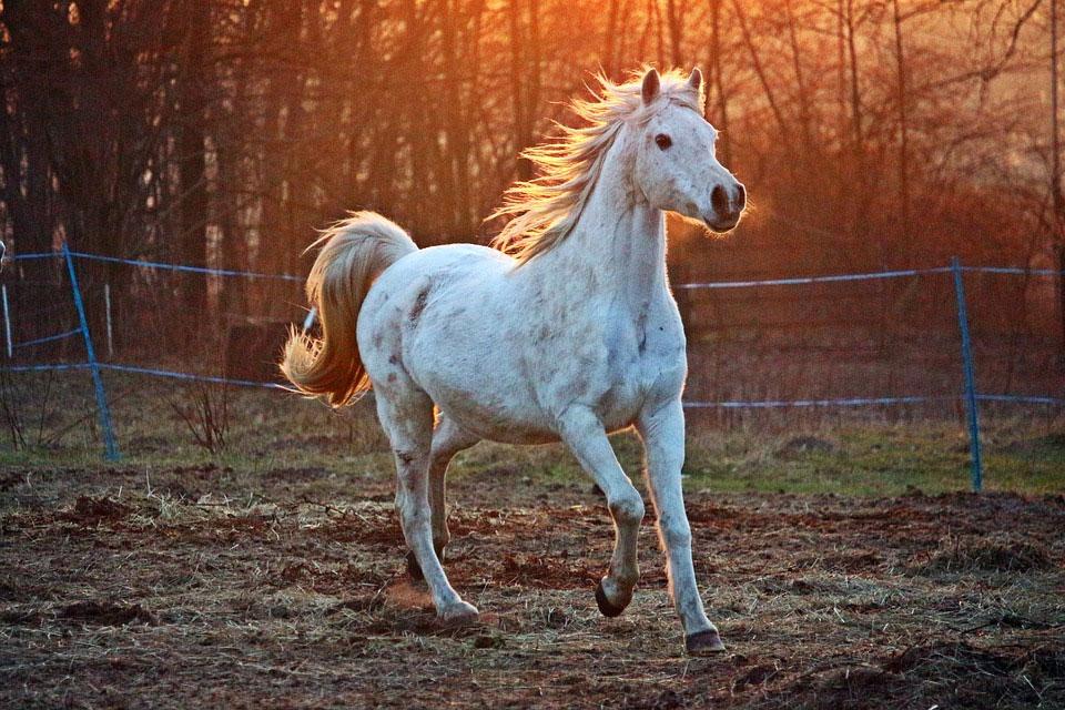 Le cheval partenaire