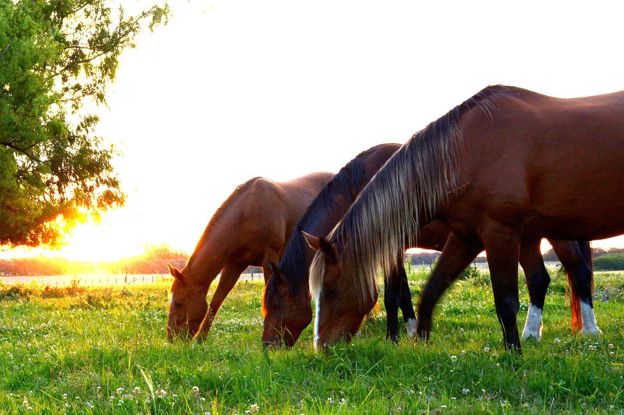 Comment nourrir mon cheval ?