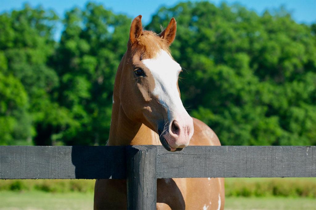 Vermifuger son cheval