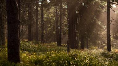 Les bois, lieux propices aux des tiques
