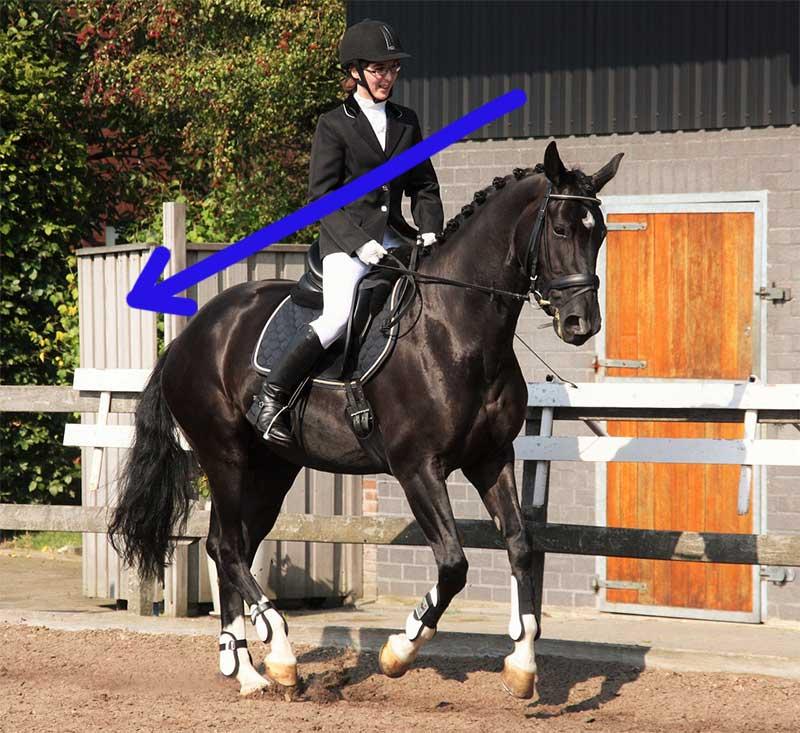 cheval sur les hanches