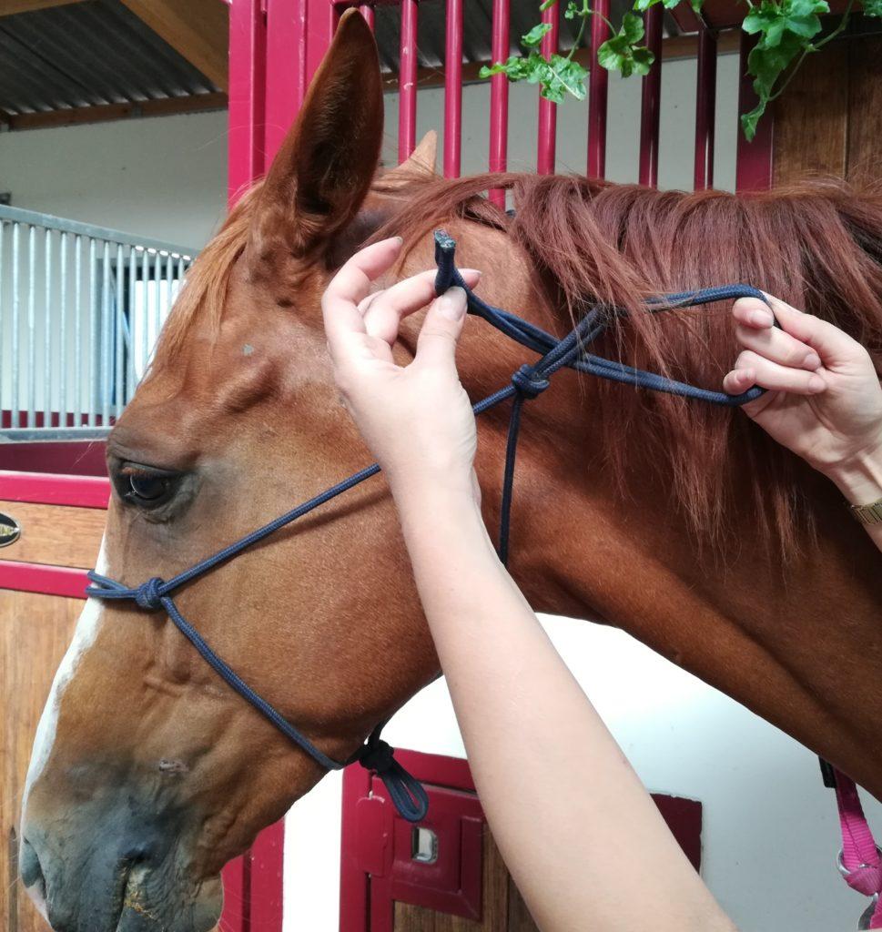 Comment éduquer son cheval, l'équitation éthologique