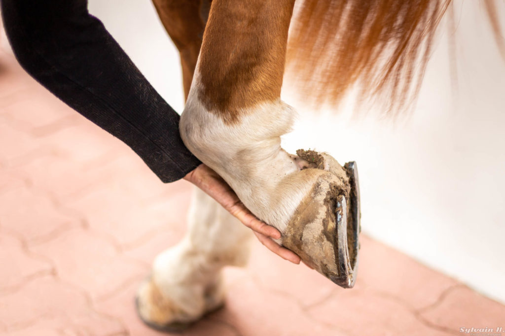 pied ferré cheval
