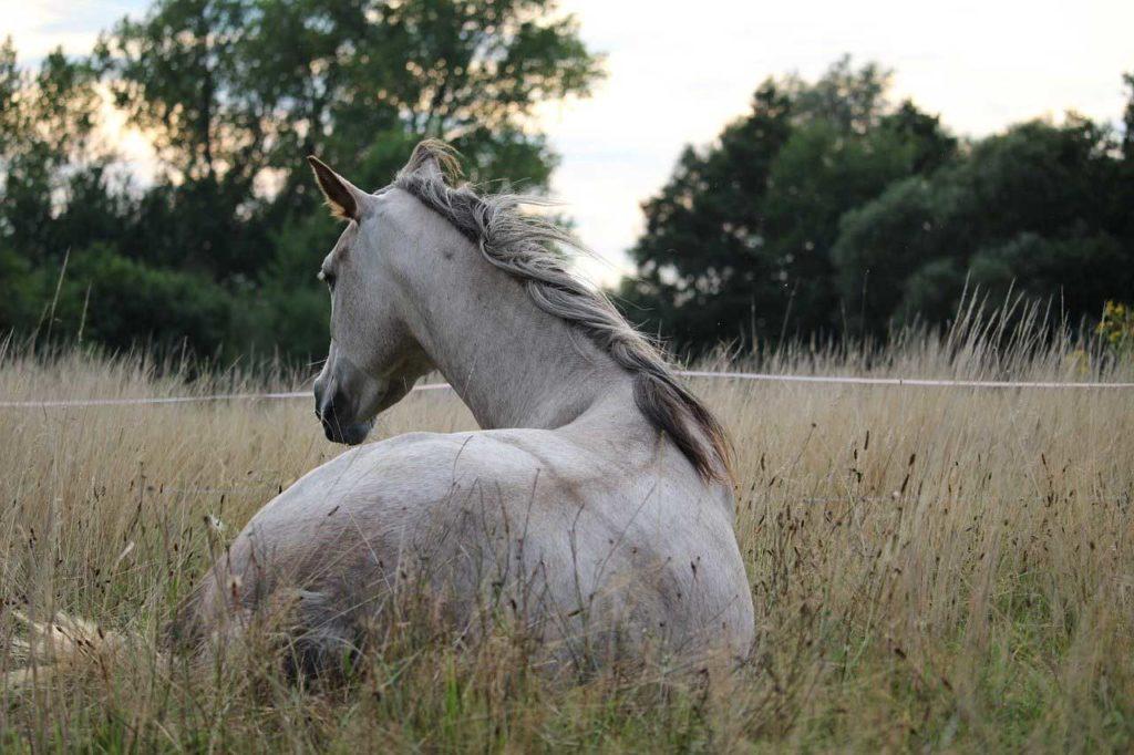 7 gestes pour préserver le dos de son cheval au travail