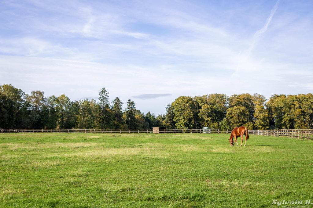 cheval broutant de l'herbe dans une carrière en herbe