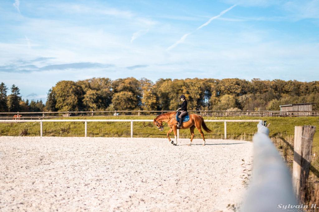 cavalier avec son cheval dans une carrière en sable