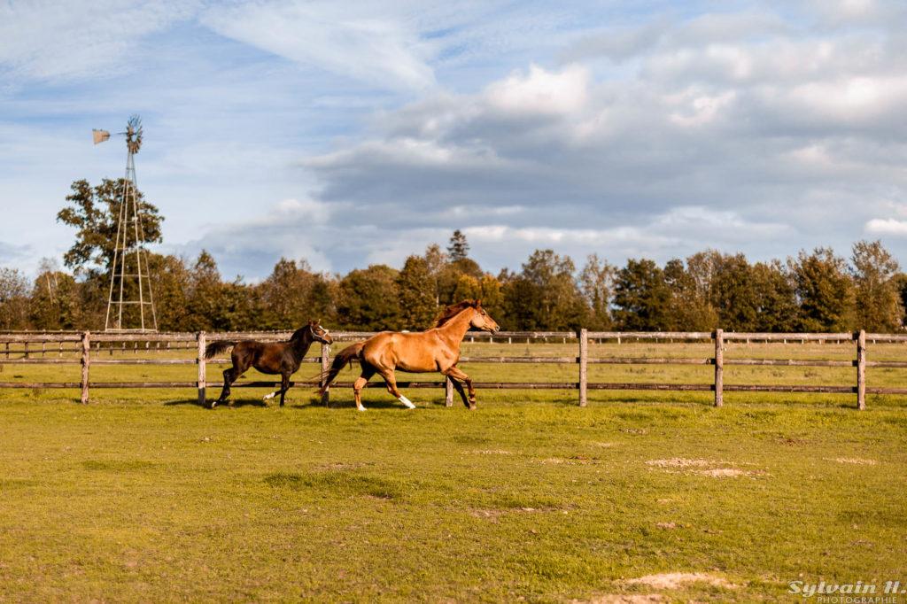 chevaux en train de courir dans une carrière