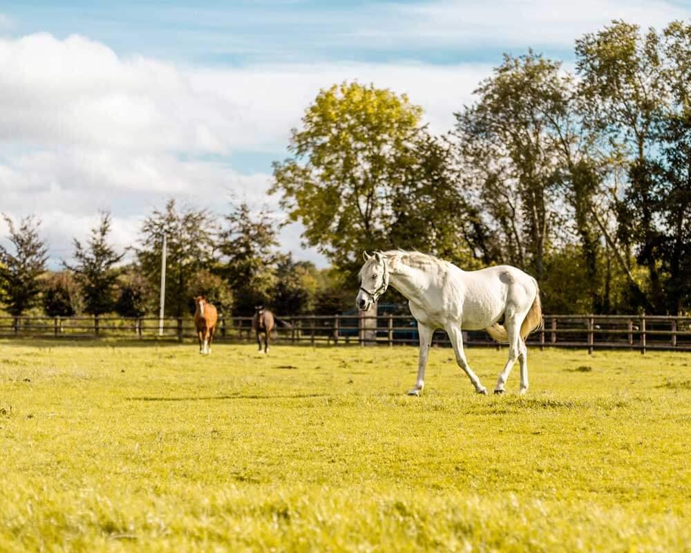 Avoir son cheval chez soi, du rêve à la réalité
